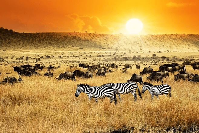 The Maasai Marai National Reserve - One of the biggest concentrations of game in Kenya